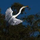 101710 Great White Egret by Marvin Collins
