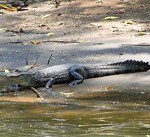 Costa Rican Crocodile by Al Bourassa