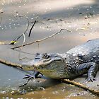 Costa Rican Crocodile III by Al Bourassa