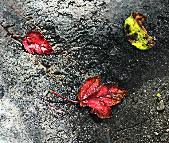 Three Leaves by OntheroadImage
