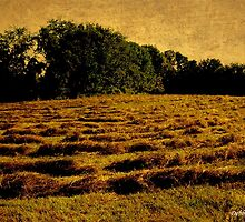 Golden Hayfield by Debbie Robbins