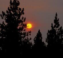 Smokey Sunrise by OneRudeDawg