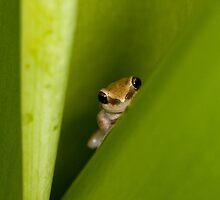 Peek A Boo by john  Lenagan