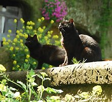 On a Stone Wall-Calcata, Italy by Deborah Downes