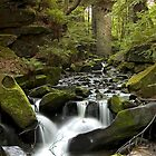 Healey Dell, Rochdale by davidrhscott