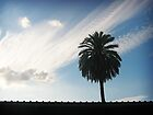 Lonely Palm by Maria  Gonzalez