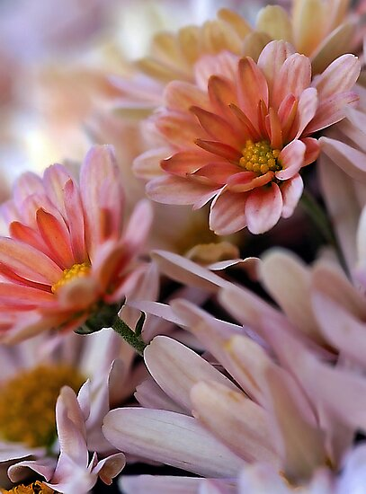 Peach Mums by T.J. Martin