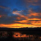 Marsh Morning by ducilla