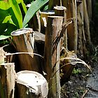 Stumps Along a Walkway by Loveley Photography