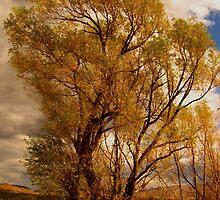 Tree by JoAnn Glennie
