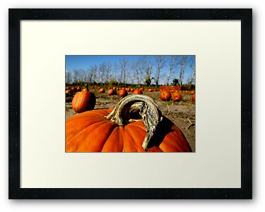 Pumpkin Patch by shutterbug2010