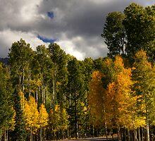Fall Foliage by Sue  Cullumber