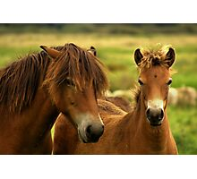 Exmoor Pony with Foal Photographic Print