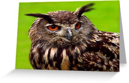 Eagle Owl by Trevor Kersley