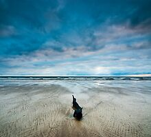 Lonely, Peggs Beach Tasmania by NickMonk