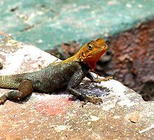 Lizard by heinrich