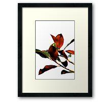 Magnolia tree 8928 Framed Print