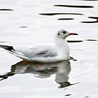 Black- headed gull in winter plumage by inkedsandra