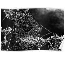 Dewy spiders' webs Poster