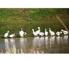 Pelicans on Unity Lake Photographic Print