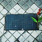 Poetry... by Denis Marsili - DDTK