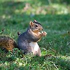 Squirrel Eating a Nut - Eugene Oregon by Randall Ingalls