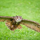 Eagle Owl test flight by Daniel  Parent