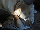 Dog Tired by Brenda Boisvert
