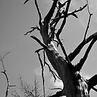 Brittle tree by jotower