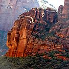 Navajo Sandstone -  Zion National Park - USA by RichardKlos