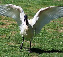Crazy Bird! by Joanne Emery