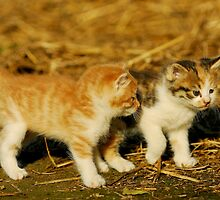 cat sisters by davvi