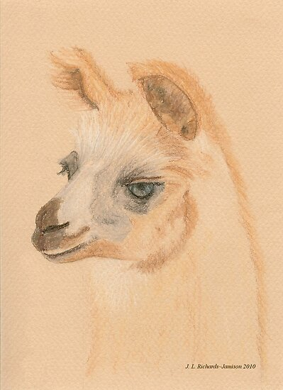 Llama by Jennie L. Richards