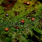 Lady Bugs by Bruno Amaral Pereira