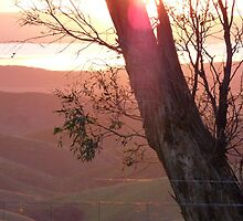 From Hancocks Lookout South Australia # 3 by Virginia McGowan