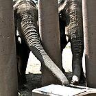 Thirsty elephants by jotower