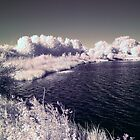 Summer Leys, IR, Sony P93A by David W. Harris