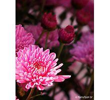 Vibrant Pink Mum Photographic Print