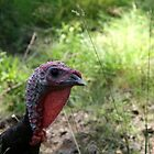 Turkey by Oceanna Solloway