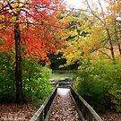 Walkway to Pachaug Pond by Debbie Robbins