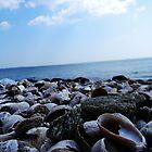 Beach Shells_2 by Kyle LeBlanc
