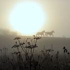 Ponies in the foggy morning by Alan Mattison