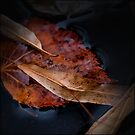 leaves by rita vita finzi