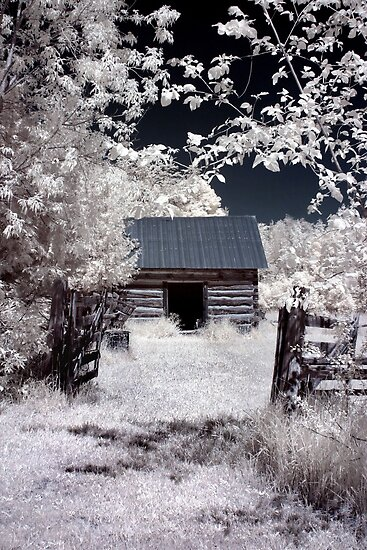 The Old Farm Shed - Dunrobin Ontario by Debbie Pinard