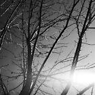 spring tree by goodnightmoon