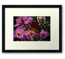 Transformed to be beautiful Framed Print