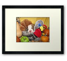 Uno Asleep With The Turkey Framed Print