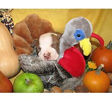Uno Asleep With The Turkey Photographic Print