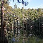 Cypress Tree Reflections by RebeccaBlackman