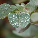 Green leaf after rain by jozi1